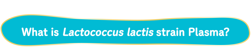 Origin of the name Lactococcus lactis strain Plasma